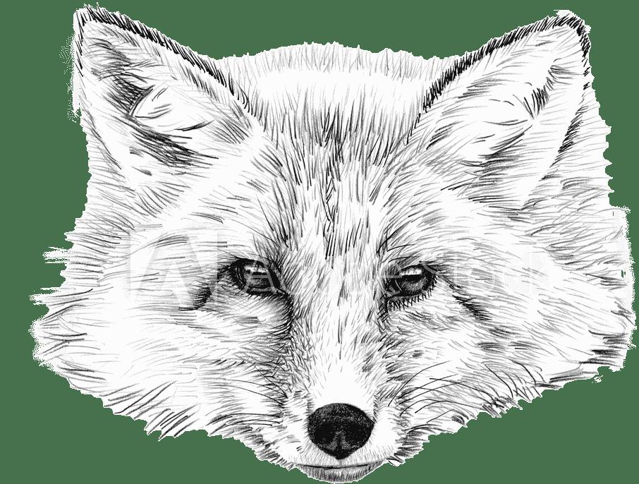 fox Création de site Internet à Reims, Epernay, Paris  ⭐️